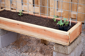 Raised Redwood Garden Bed