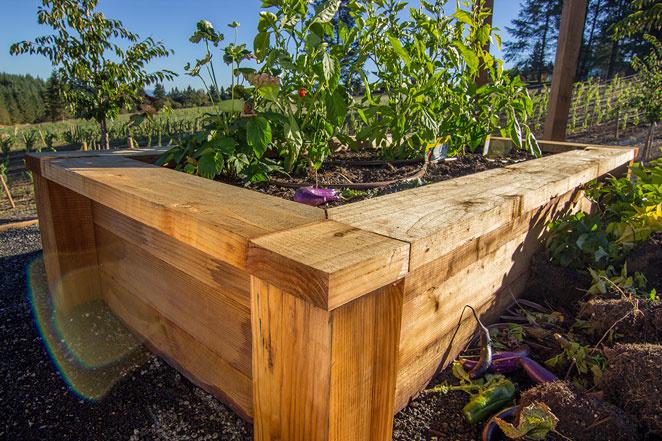 Using Redwood To Build Raised Garden Beds